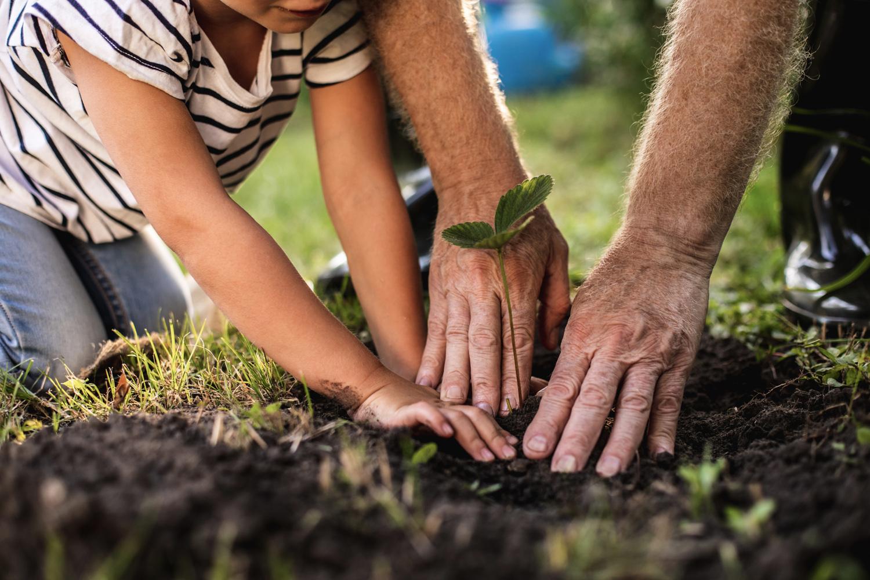Hände pflanzen eine Blume